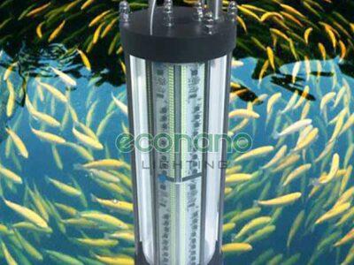 đèn đánh bắt cá hải phòng